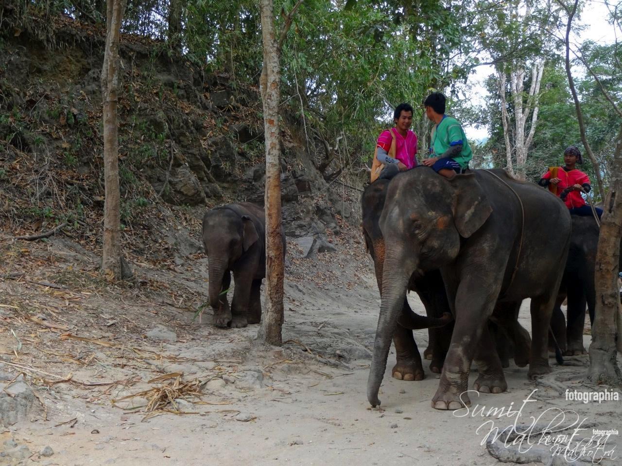 Patara Elephant Farm, Chiang Mai