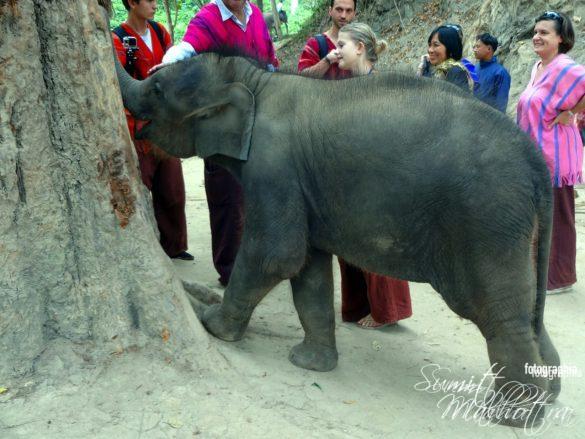 Elephants & Tourists