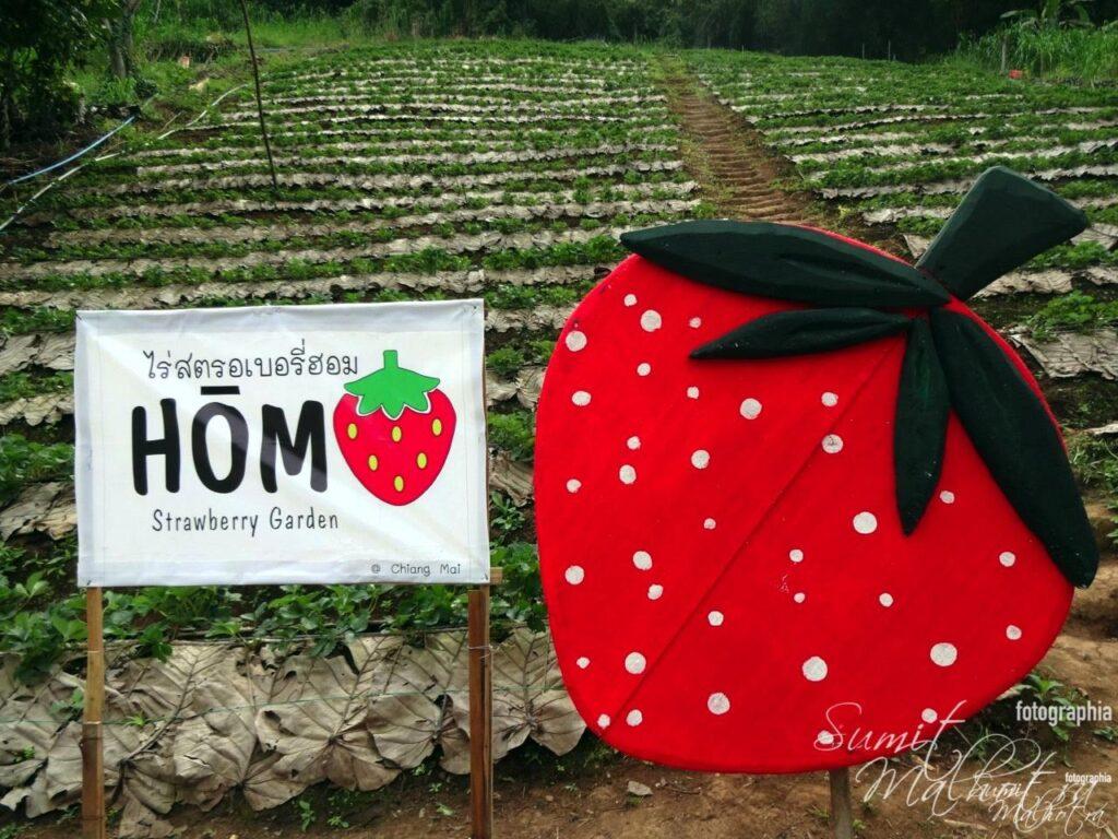Hom Strawberry Garden, Around Karma Royal Bella Vista, Chiang Mai