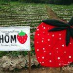 Hom Strawberry Garden Chiang Mai Review