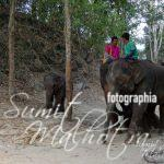 Patara Elephant Farm Review - The Abode of the Rescued Thai Elephants