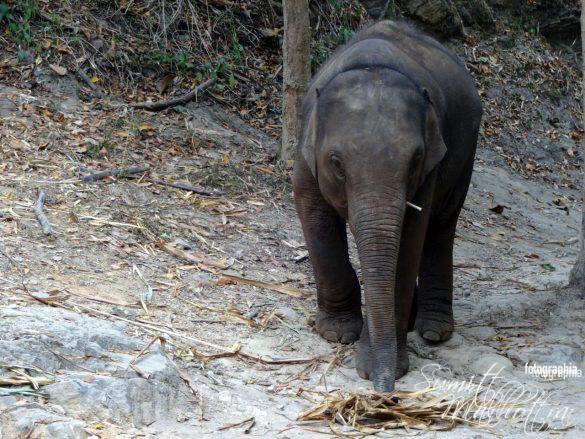 Patara Elephant Farm Chiang Mai