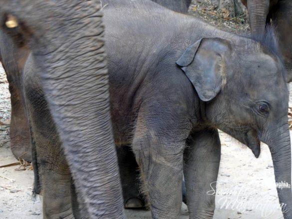 Patara Elephant Farm Pachyderms