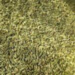 Health Benefits of Fennel Seeds or Saunf