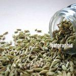 Health Benefits of Fennel Seeds