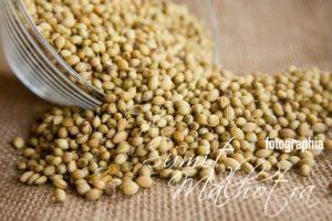Coriander seeds for immunity