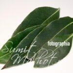 Fresh Bay Leaves | Health Benefits of Bay Leaves