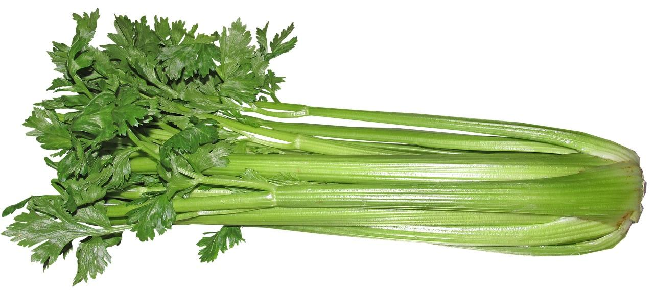 All About Celery | Health Benefits of Celery (Apium graveolens)