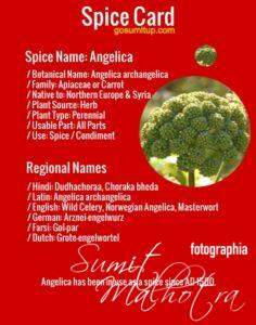 Spice Card - All About Angelica aka Dudhachoraa (Angelica archangelica)