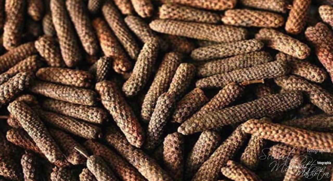 Health benefits of indian long pepper, pippali or pipli (piper longum)
