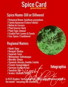 Spice Card - All About Dill | Know Your Spice Sowa or Soya (Anethum graveolens)