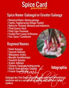Spice Card - All About Galangal | Know Your Spice Greater Galanga (Alpinia galanga)