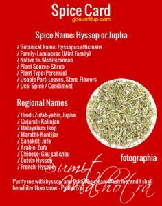 Spice Card - All About Hyssop | Know Your Spice Jupha (Hyssopus officinalis)