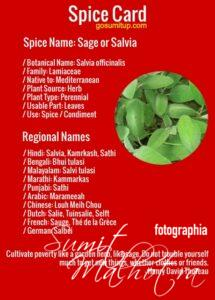 Spice card - all about sage | know your spice salvia (salvia officinalis)
