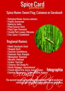 Spice Card - All About Sweet Flag | Know Your Spice Gorabach (Acorus calamus)