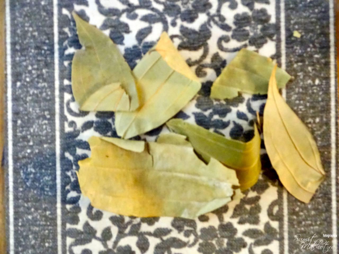 Indian bay leaf tejpatta cinnamomum tamala